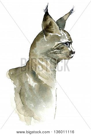 Watercolor portrait of cat. Hand drawn painting.