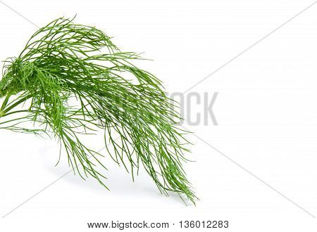 Fresh green fennel isolated on a white background