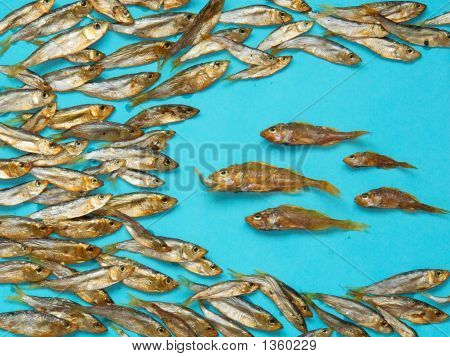 A School Of Smoked Fish On Blue Paper