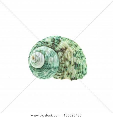 green spiral and curly shell texture. ..