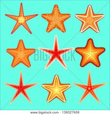 Starfish, a set of nine options. Marine theme