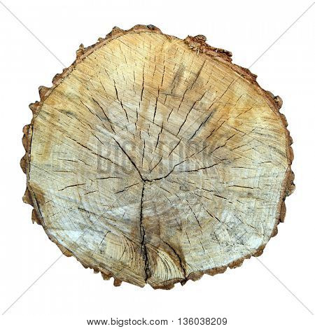 sawed tree cut isolated on a white background