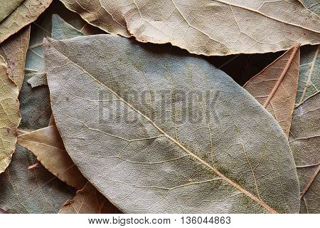 bay leaves, laurel leaf, dry bay leaf, laurel background, spice photo, laurel photo