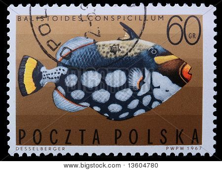 Poland - Circa 1967: A Stamp - Clown Triggerfish