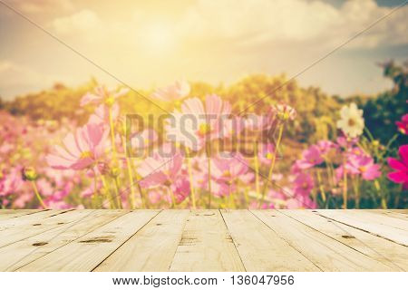 Abstract Blurred Cosmos Field  Flower And Sunlight With Vintage Tone.