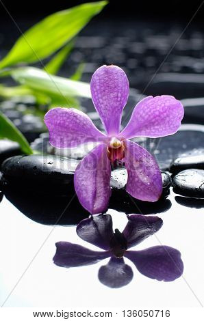 Pink orchid with pebbles and bamboo leaf on wet background