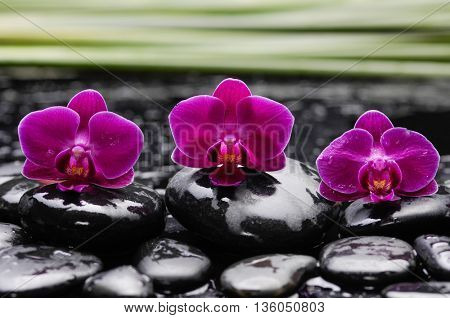 Three red orchid with pebbles and green leaf on wet background