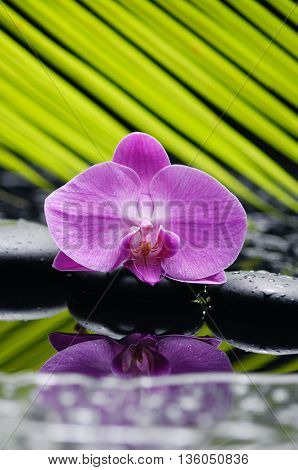 Pink orchid with pebbles and green leaf on wet background