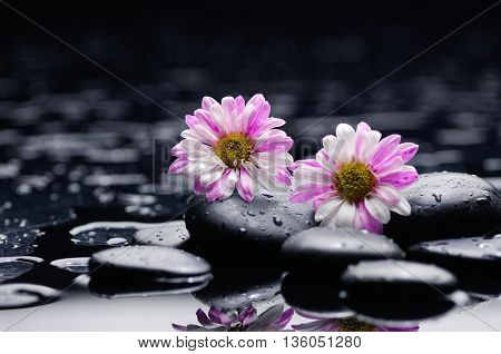 beautiful two Gerbera with wet stones on wet