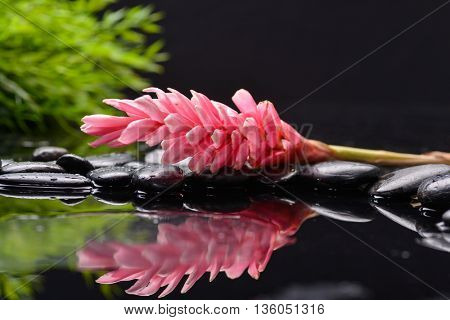 Red ginger flower with leaf and stones on wet background