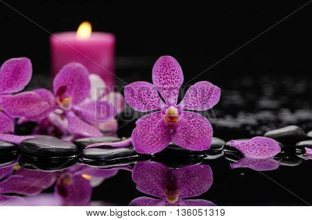 still life with red orchid and candle on black stones