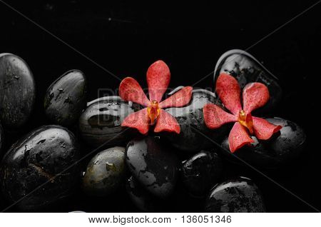 Two red orchid with black stones on wet pebbles