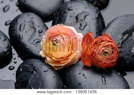 Two ranunculus and therapy stones