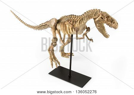 Dinosaur Tyrannosaurus Rex skeleton on a white background
