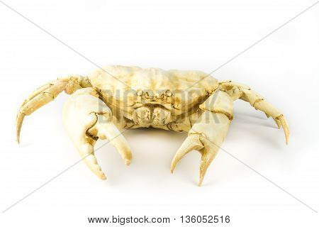 Decorative statuette crab, isolated on white background.