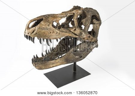 The head of a dinosaur Tyrannosaurus Rex on a white background