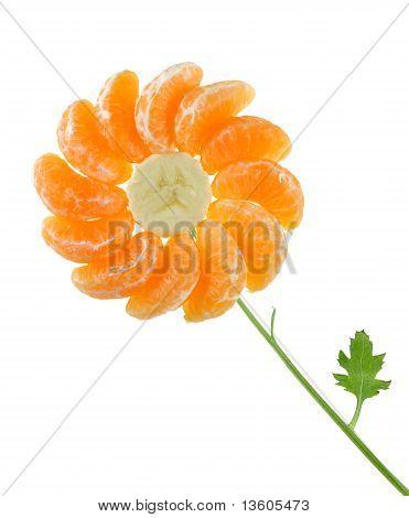 Friut Flower