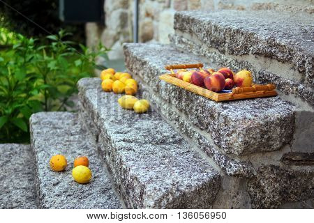 Colorful fruits from garden trees on the tray
