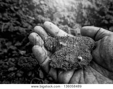 Young Plant On Pool Soil In The Human Hand Holding.
