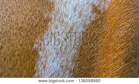 Close up giraffe skin in soft focus Abstract background