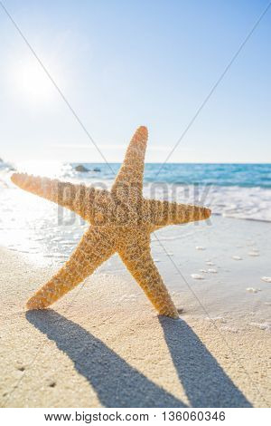 Starfish on the beach on a sunny day