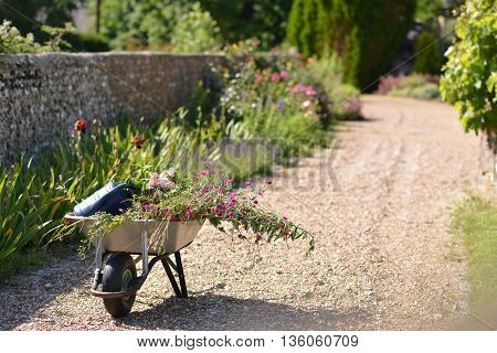 Wheelbarrow and plants in traditional English country garden