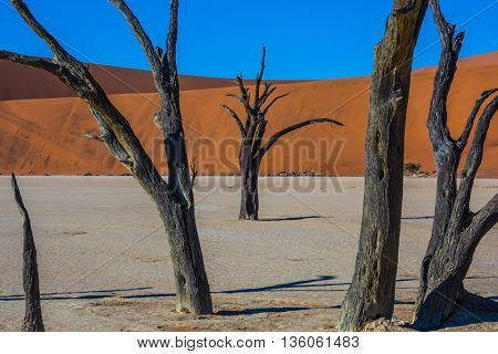 Travel to Namibia, Namib-Naukluft National Park. Dry lake surrounded by orange dunes. Morning long shadows of dry trees
