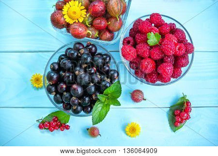 Ripe juicy berries in glass bowls on painted blue wooden background, black and red currant, raspberry, gooseberry, peppermint leaves and yellow chamomiles, summer fruits and flowers