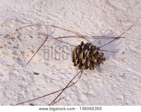 pine cone lying alone on the sand