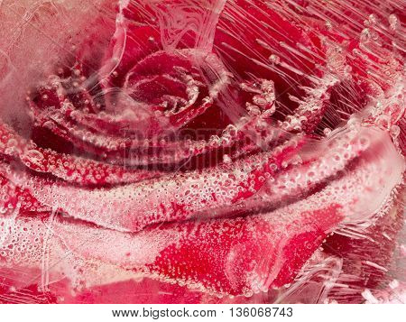 beautiful organic abstraction with flower red rose frozen in a transparent clear water with air bubbles
