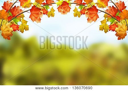 Autumn landscape. Beautiful autumn leaves. Golden autumn.