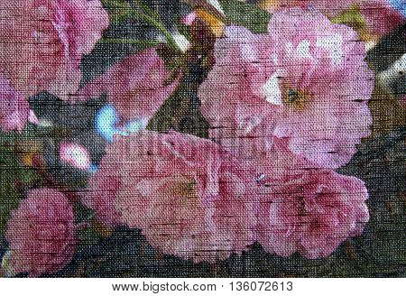 Season Background with Beautiful flowering Japanese cherry Sakura - Photo made with canvas texture effect