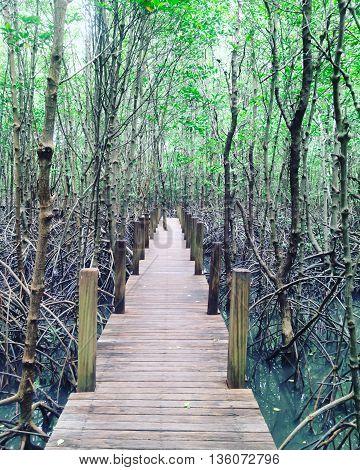 The Wooden walkway Kung Krabaen chanthaburi, Thailand