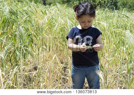 Portrait of a little girl holding wheat stalk in a green wheat farm.