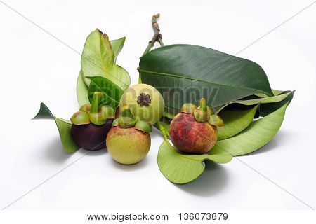 Fresh mangosteen gradually changed from raw to ripe step by step.