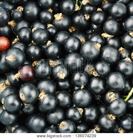 Black ripe currant berry top view fruit background