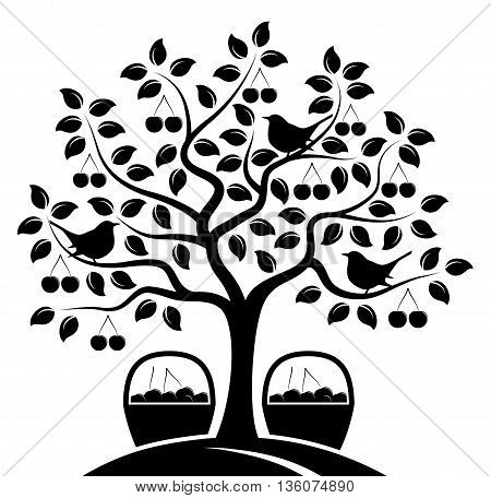 vector cherry tree with birds and baskets of cherries isolated on white background