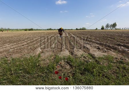 Woman working in the field outside of the city of Samarkand in Uzbekistan.