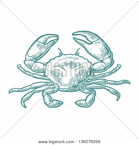 Crab isolated on white background. Vector vintage engraving illustration for menu web and label. Hand drawn in a graphic style.