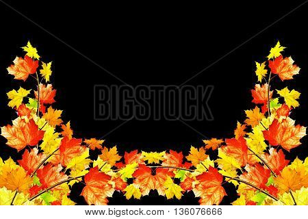 autumn leaves isolated on black background. Golden autumn;
