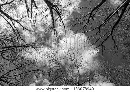 Branches of trees against the backdrop of a cloudy sky