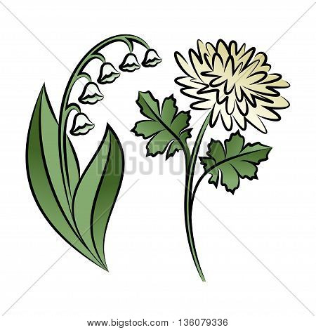 Set of two outlined flowers. Lilies and chrysanthemums In sketch hand drawn style. Vector illustration