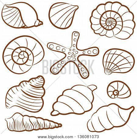 Collection of different outline seashell set isolated on white
