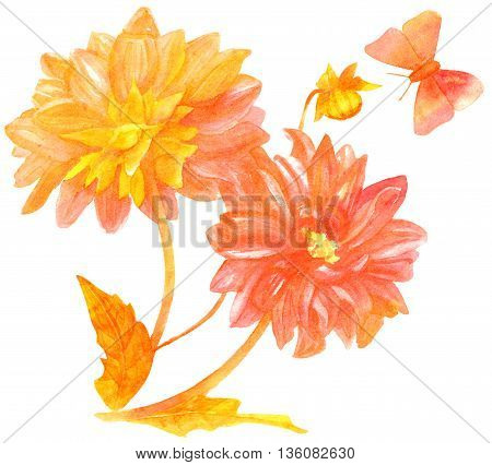 A vintage style watercolor drawing of a bouquet of golden and pink toned dahlias with a butterfly on white background