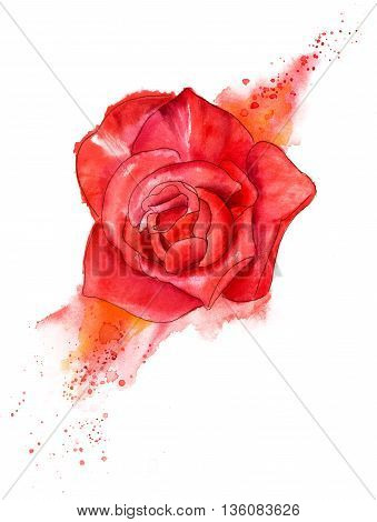 A pen and ink and watercolor drawing of a red rose with a splash of paint on white background
