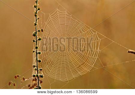 Close up of spider web on orange background