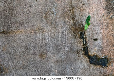 Young plant growing at the concrete crack wall
