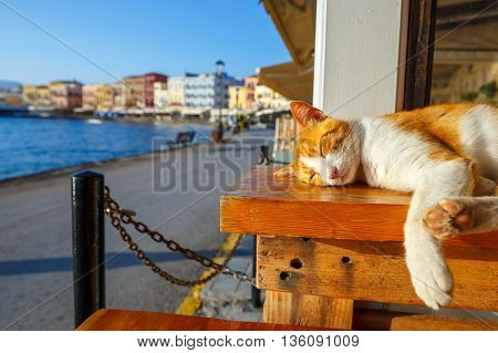Red cat sleeps on a bench in the early morning