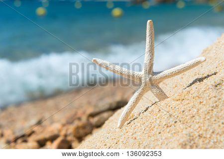 White starfish at the beach