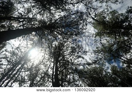 photographed from the floor of the forest with the sun on one side